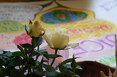 WMtE7 roses small